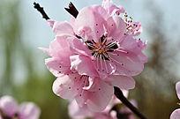 一束粉色的花