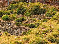 自然保护区塔头群落