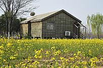 木屋庭院油菜花香