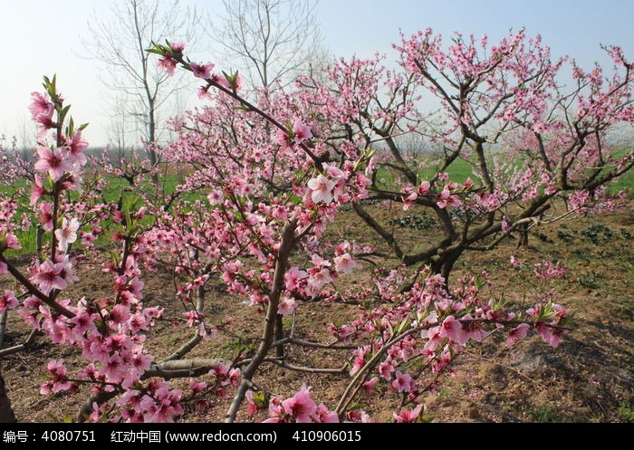 桃花园图片,高清大图_田野田园素材