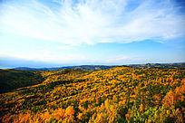 大兴安岭原生态森林秋季风光