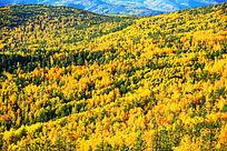 金秋山林风景