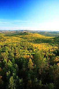 金色的大兴安岭之秋