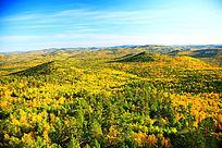 金色的原始森林