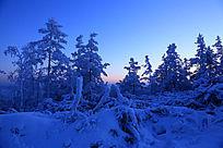 原始森林地理冰雪风光