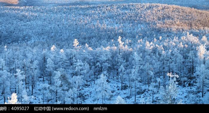 原创摄影图 自然风景 森林树林 大兴安岭银冬夕阳染红山峰  请您分享图片