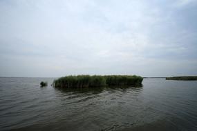 哈素海湖中芦苇