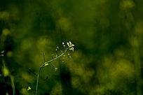 绿丛中的小花