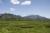 绿色的云蒙山田野