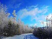 森林冬季雪路