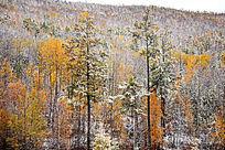 原始森林秋季秋雪