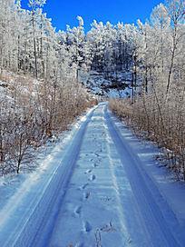 原始森林雪路