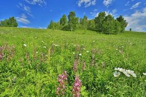原野丰茂的植被