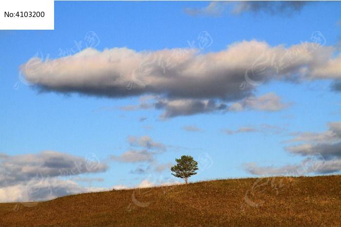 原野一棵树图片