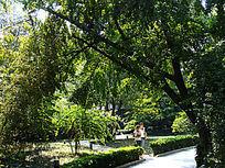 北京竹园 树林荫翳