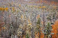 大兴安岭原始森林秋季雪景