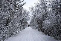 积雪覆盖的林间公路