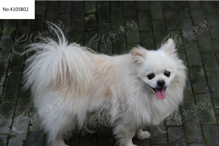 可爱小狗图片,高清大图