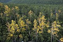 秋到原始森林