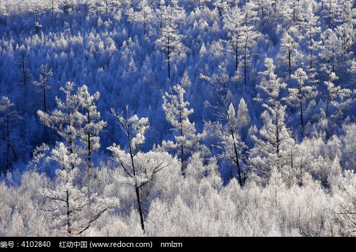 森林之冬景图片