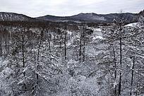 水墨画一样的山林