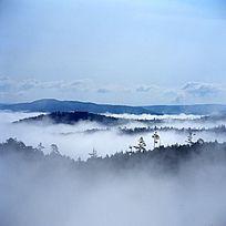水墨原始森林