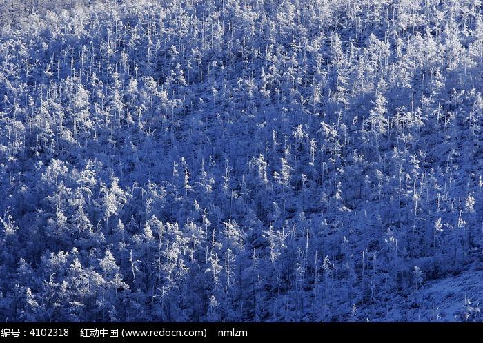 雪森林图片,高清大图_森林树林素材
