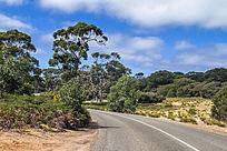 澳洲袋鼠岛农场上的公路自然风光