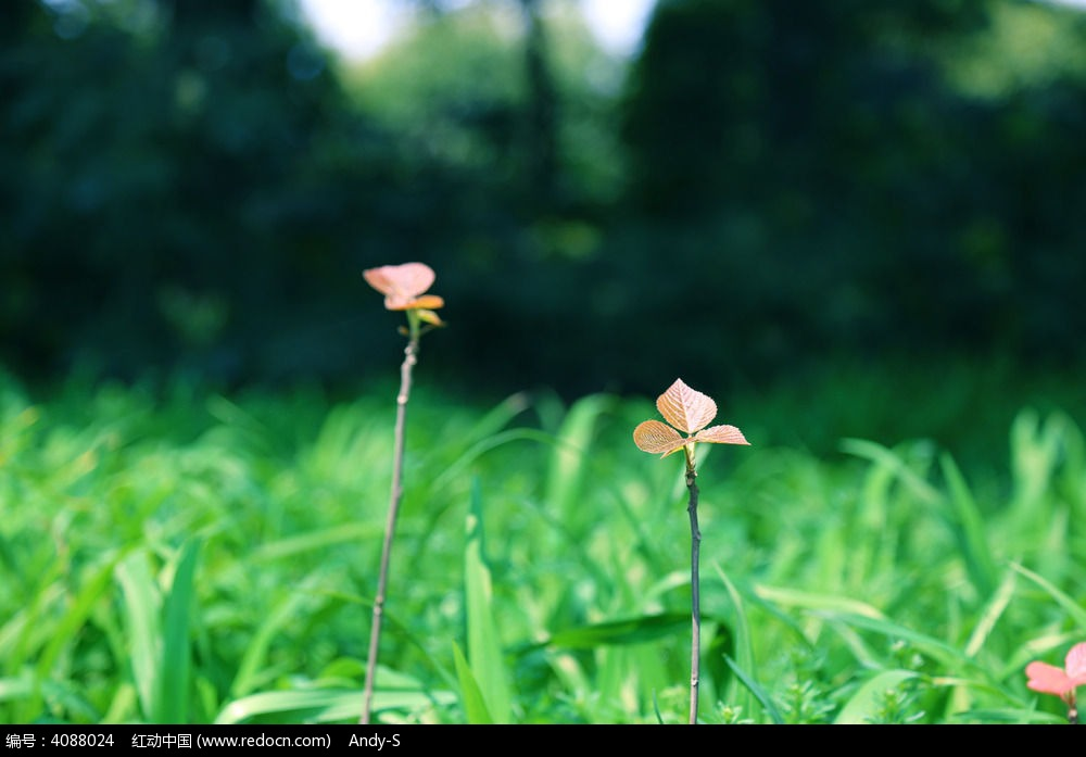 原创摄影图 动物植物 树木枝叶 春天树叶  请您分享: 红动网提供树木