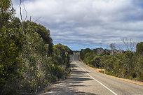 袋鼠岛热带雨林公路