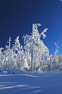 大兴安岭雪森林