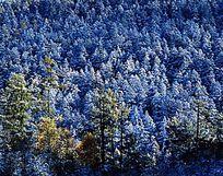 镀银的原始森林