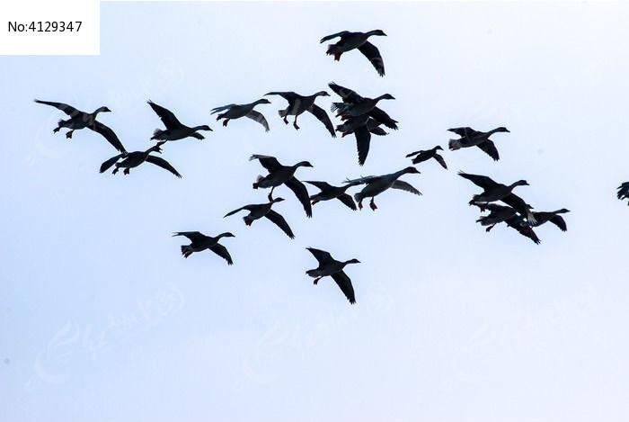 飞行的鸟类图片,高清大图_空中动物素材
