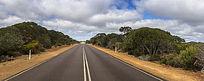 国外热带雨林公路风光