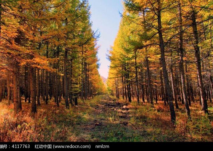 黄岗梁国家森林公园距克什克腾旗多少公里