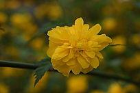 黄色绽放中的花