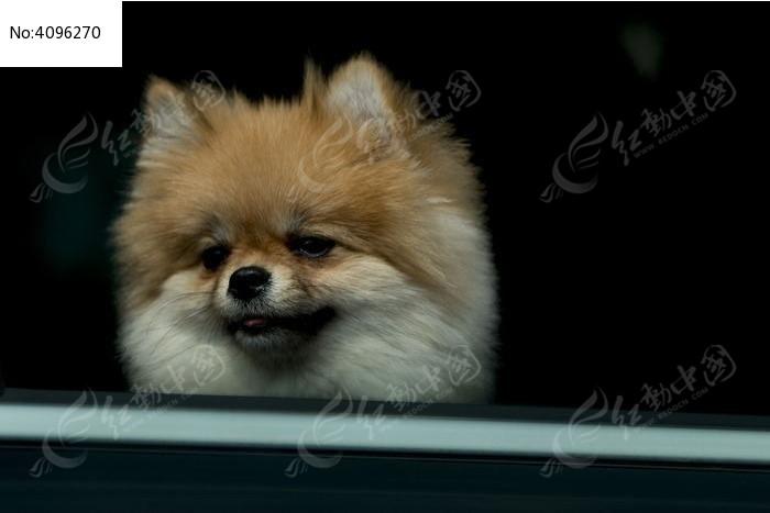小狗的表情图片