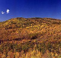 原始森林秋季