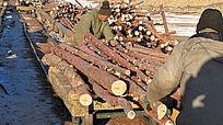 工人在用轨道车运输原木