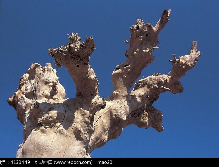 蓝天背景枯木图片,高清大图_沙漠戈壁素材