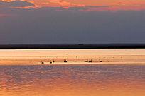 宁静的天鹅湖暮色