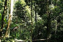 西双版纳风貌的森林植被