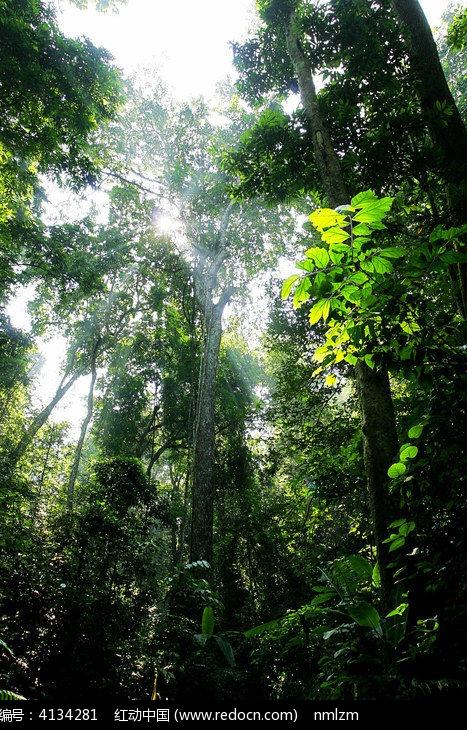 西双版纳热带雨林风光图片,高清大图_森林树林素材