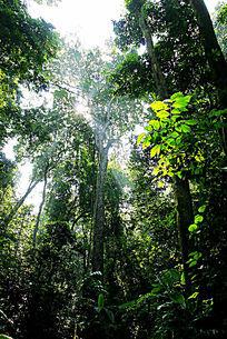 西双版纳热带雨林风光
