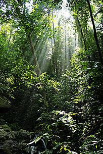 西双版纳森林之光
