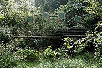 西双版纳原生态森林