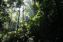 西双版纳原始森林