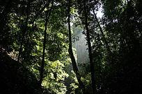 西双版纳雨林风光
