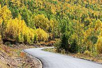 原始森林柏油公路
