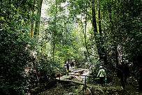 云南省西双版纳天然林
